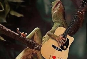 iguana-playing-guitar-funny-pics